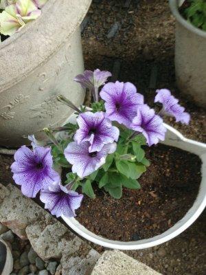 お花3 190526