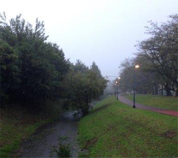 本日は朝は雨19104