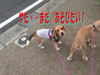 べ~~っクウ191006