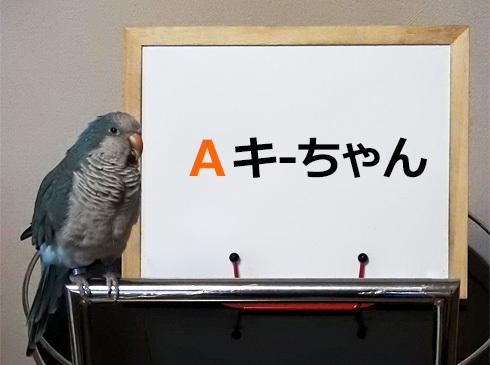 kijibato1_2
