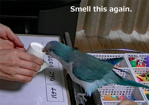 smell1_15
