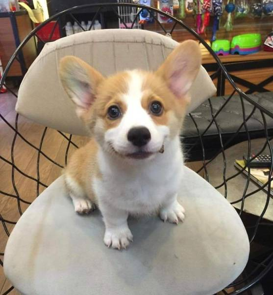 子犬の画像(26枚目)