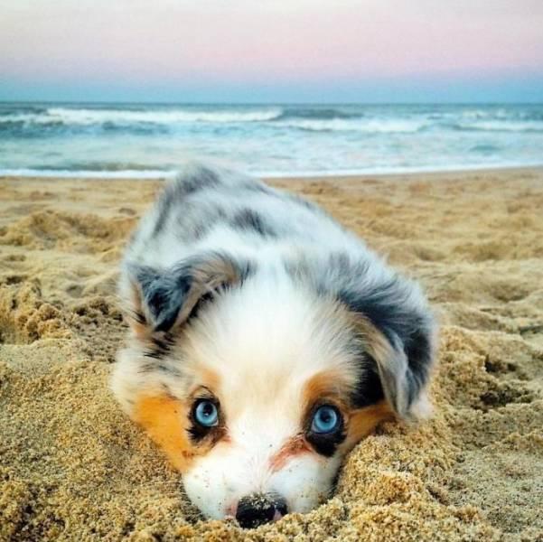 子犬の画像(3枚目)