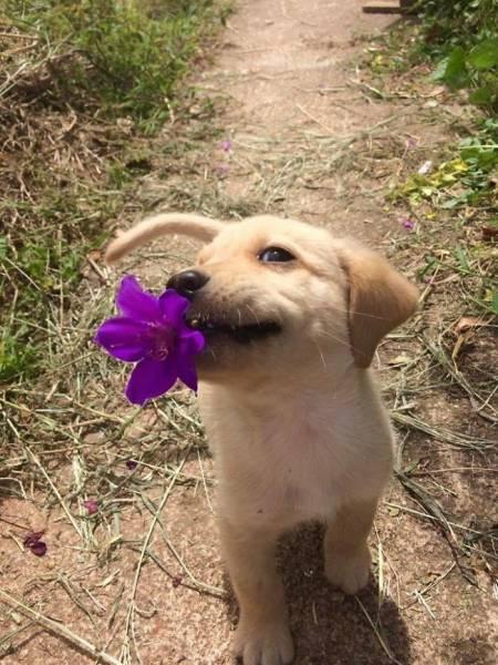 子犬の画像(4枚目)
