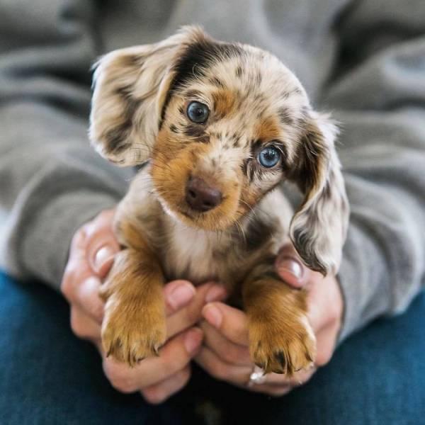 子犬の画像(5枚目)