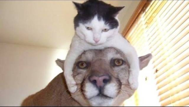 種類が違っても仲が良い動物の画像(1枚目)