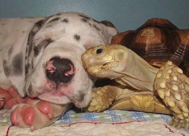 種類が違っても仲が良い動物の画像(13枚目)