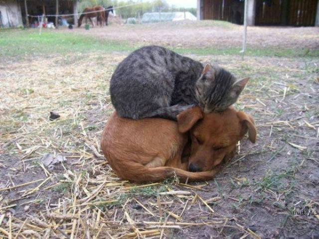 種類が違っても仲が良い動物の画像(14枚目)