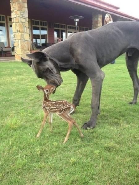種類が違っても仲が良い動物の画像(15枚目)