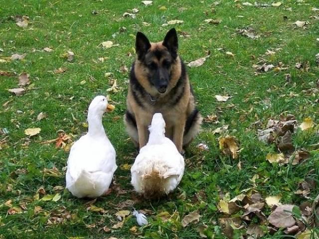 種類が違っても仲が良い動物の画像(18枚目)