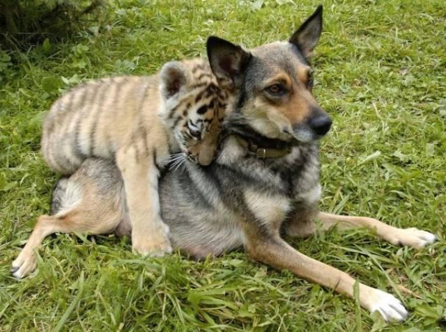 種類が違っても仲が良い動物の画像(22枚目)