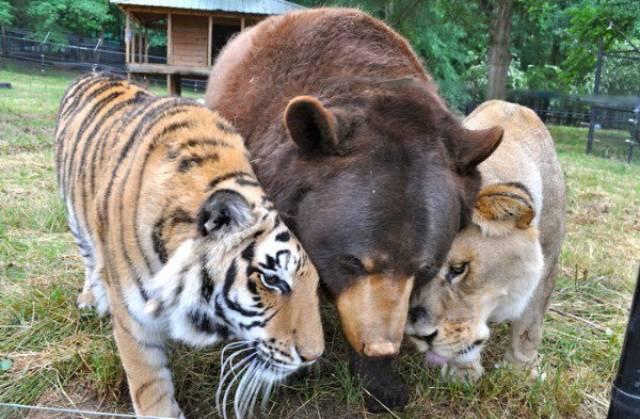 種類が違っても仲が良い動物の画像(2枚目)
