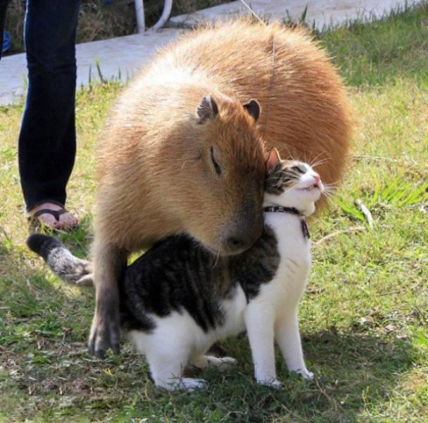 種類が違っても仲が良い動物の画像(6枚目)