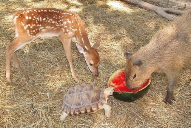 種類が違っても仲が良い動物の画像(7枚目)