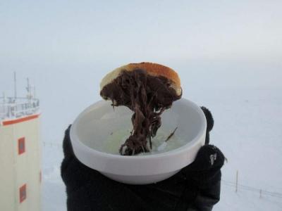 南極で食べ物を外に放置07