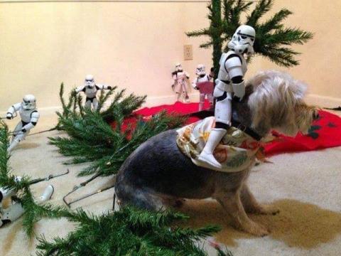 ストームトルーパーがクリスマスの準備15