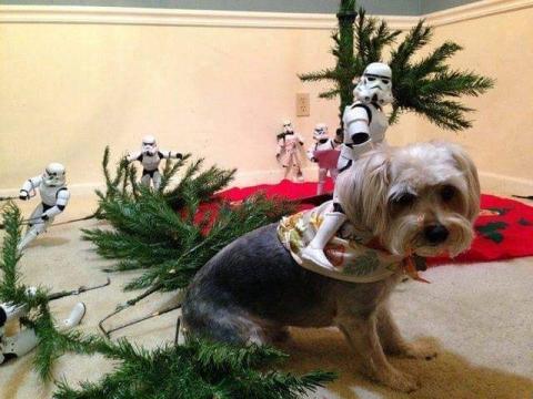 ストームトルーパーがクリスマスの準備16