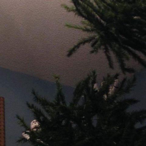 ストームトルーパーがクリスマスの準備23