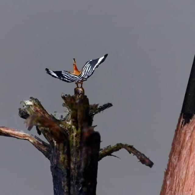 小さ過ぎる鳥の彫刻の画像(17枚目)
