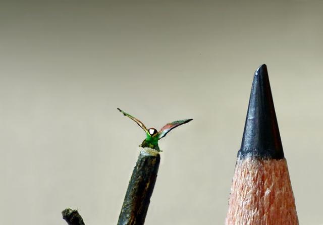 小さ過ぎる鳥の彫刻の画像(7枚目)