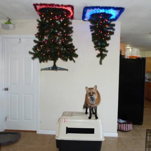 猫や犬がいる家のクリスマスツリーの画像(1枚目)