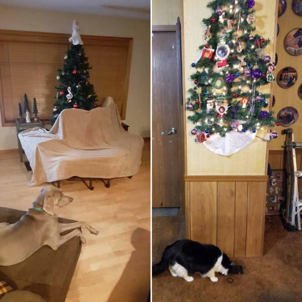 猫や犬がいる家のクリスマスツリーの画像(16枚目)
