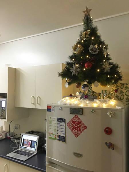 猫や犬がいる家のクリスマスツリーの画像(20枚目)