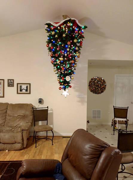 猫や犬がいる家のクリスマスツリーの画像(3枚目)