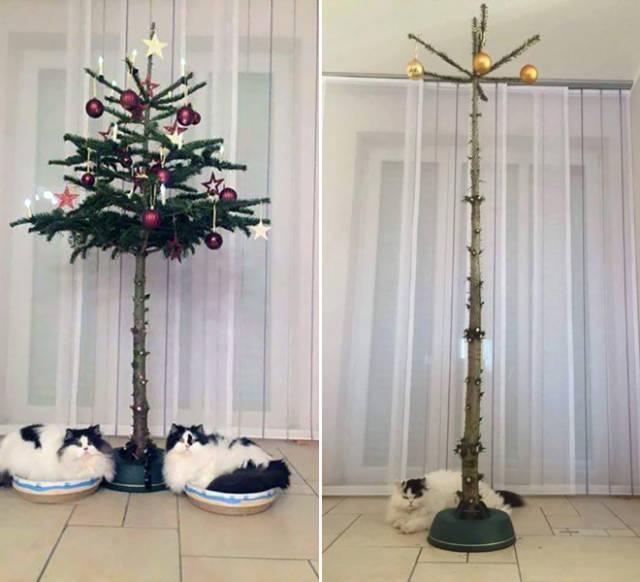 猫や犬がいる家のクリスマスツリーの画像(5枚目)