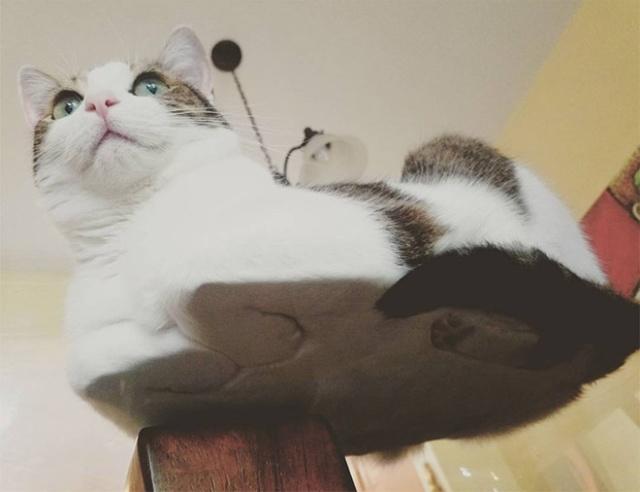 猫の裏側が丸見えの画像(1枚目)