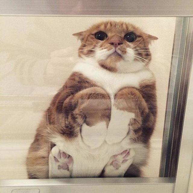 猫の裏側が丸見えの画像(12枚目)