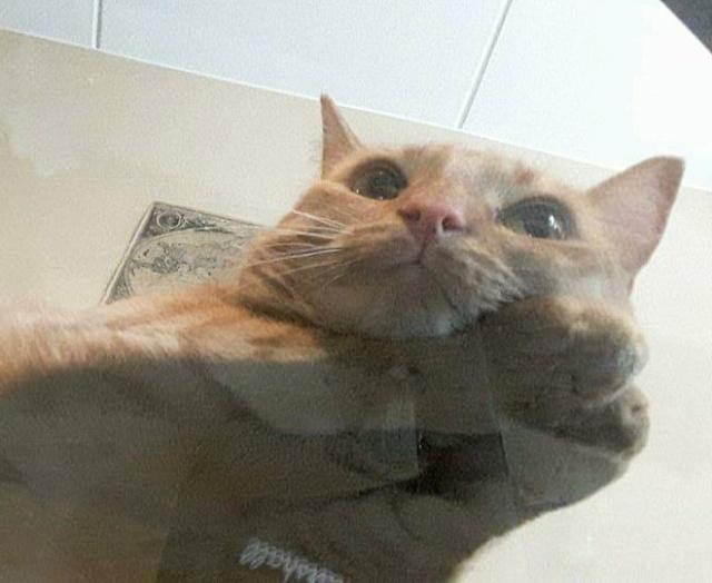 猫の裏側が丸見えの画像(13枚目)