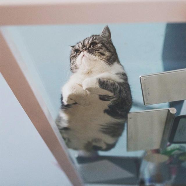 猫の裏側が丸見えの画像(19枚目)