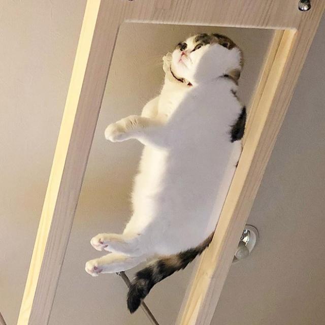 猫の裏側が丸見えの画像(2枚目)