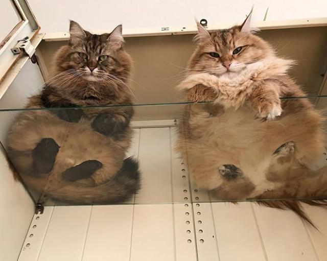 猫の裏側が丸見えの画像(5枚目)