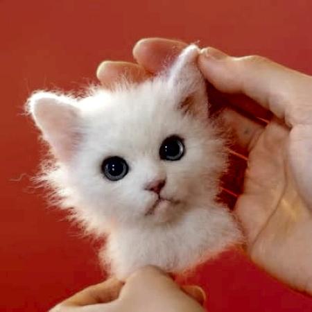 立体的な3Dの猫の肖像の画像(7枚目)