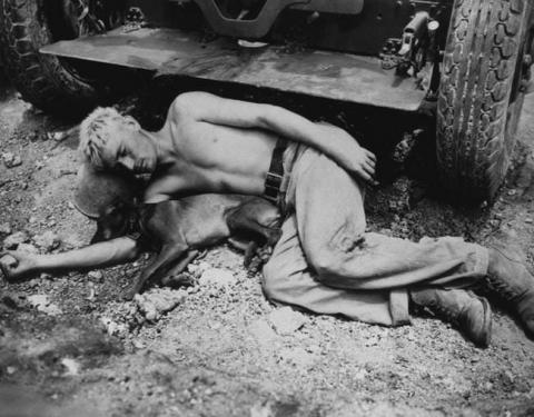 第二次世界大戦で活躍した犬02