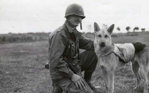 第二次世界大戦で活躍した犬06