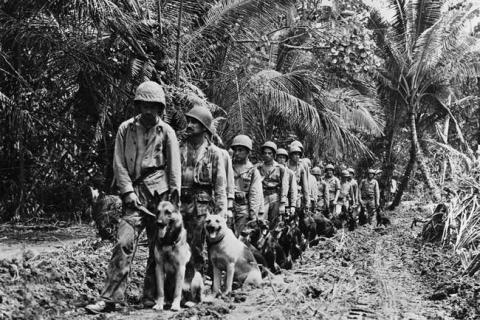第二次世界大戦で活躍した犬08