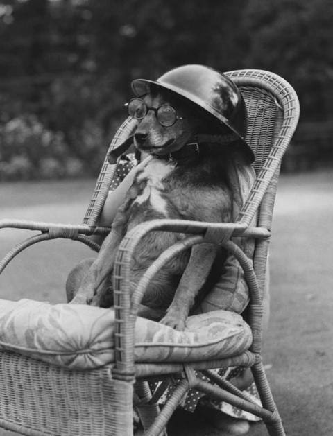 第二次世界大戦で活躍した犬12