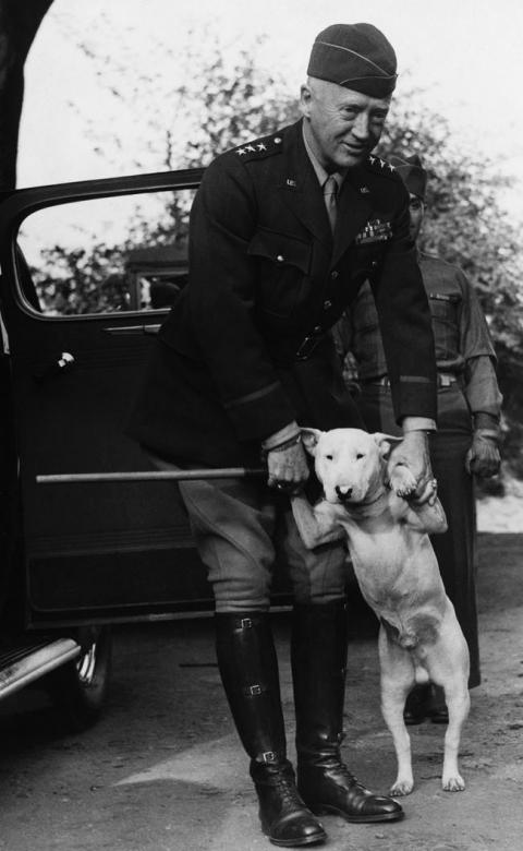 第二次世界大戦で活躍した犬13