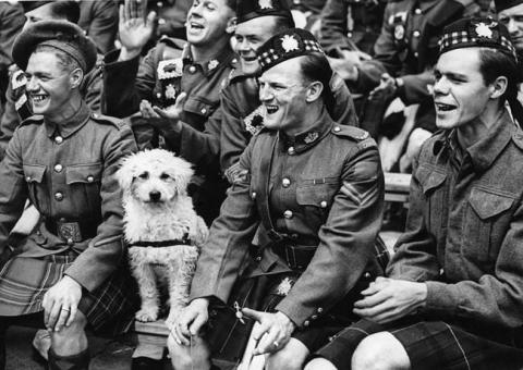 第二次世界大戦で活躍した犬14