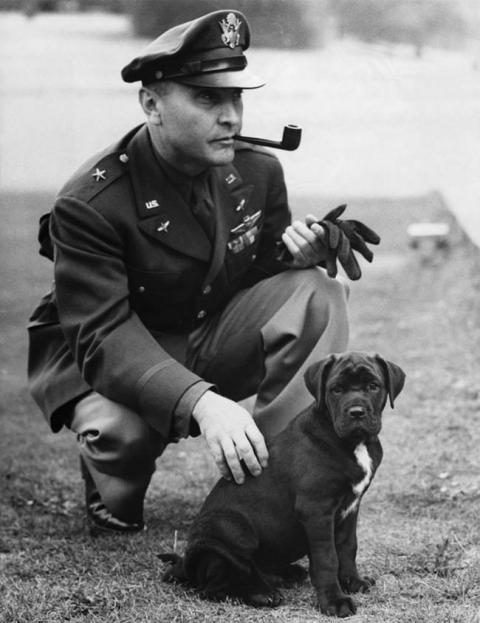 第二次世界大戦で活躍した犬15