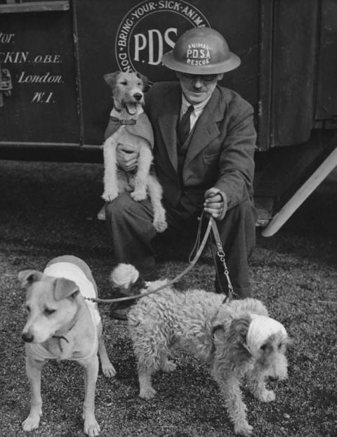 第二次世界大戦で活躍した犬16