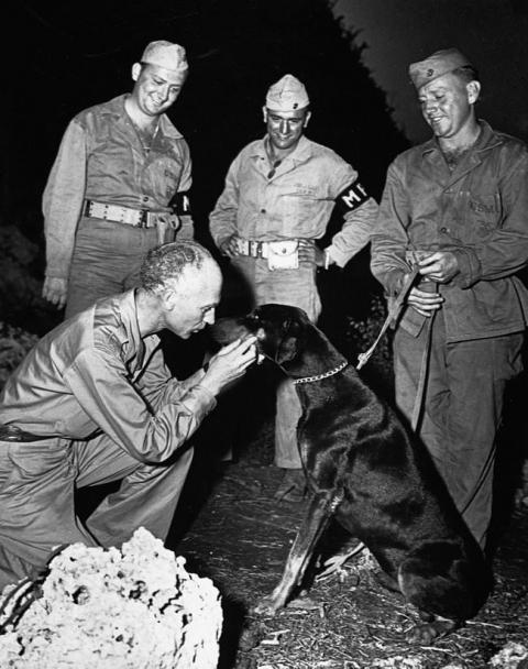 第二次世界大戦で活躍した犬17