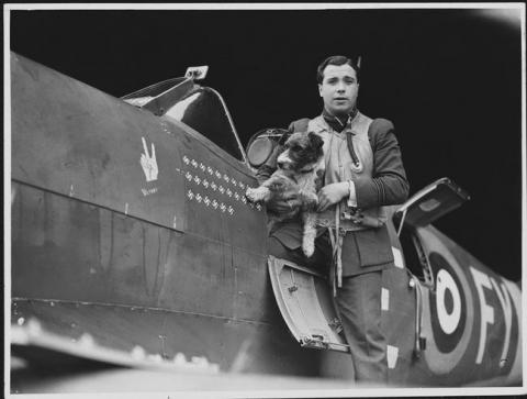 第二次世界大戦で活躍した犬18