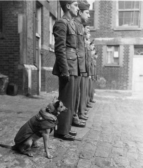 第二次世界大戦で活躍した犬19