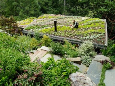 心癒される屋上庭園15