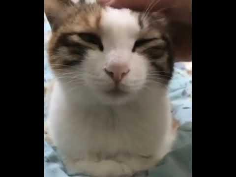 即寝する猫ちゃん