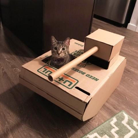 猫と戦車03